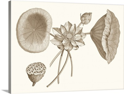 Sepia Water Lily I
