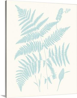 Serene Ferns I