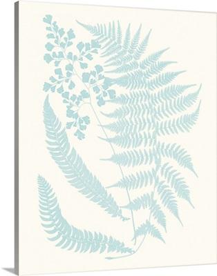 Serene Ferns II