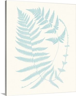 Serene Ferns III
