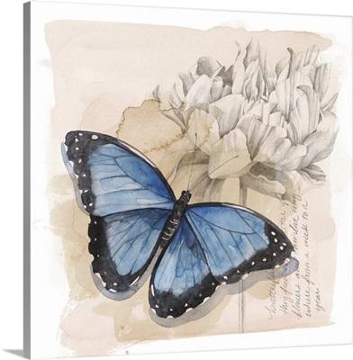 Shadow Box Butterfly II