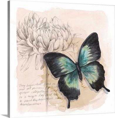 Shadow Box Butterfly III