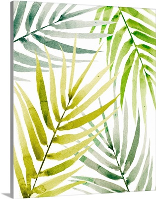 Shady Palm II