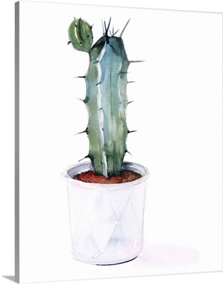 Sharp Succulents I