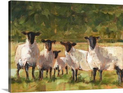 Sheep Family II