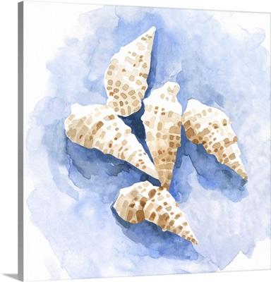 Shell Impressions I