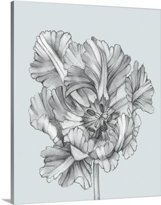 Silvery Blue Tulips I
