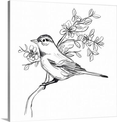Simple Songbird Sketches III
