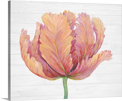 Single Pink Bloom I