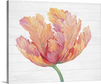 Single Pink Bloom II