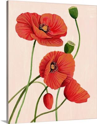Soft Coral Poppies I