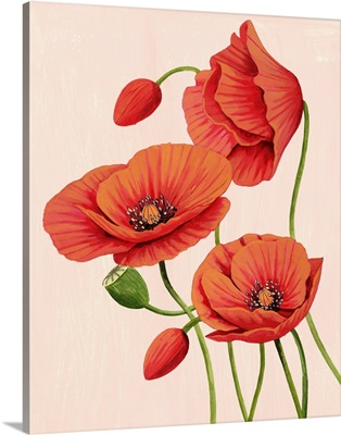 Soft Coral Poppies II
