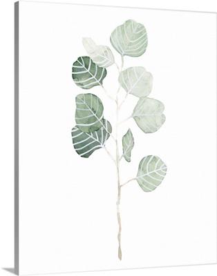 Soft Eucalyptus Branch I