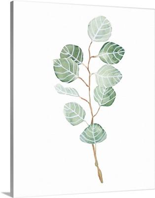 Soft Eucalyptus Branch III