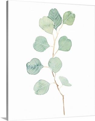 Soft Eucalyptus Branch IV