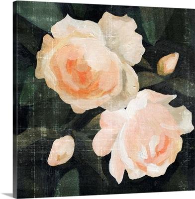 Soft Garden Roses I