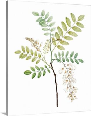 Soft Green Botanical I