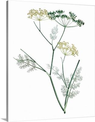 Soft Green Botanical IV