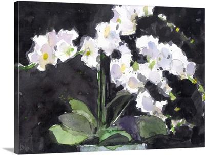Something Floral VII