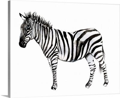 Standing Zebra II