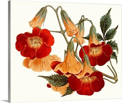 Striking Coral Botanicals IV