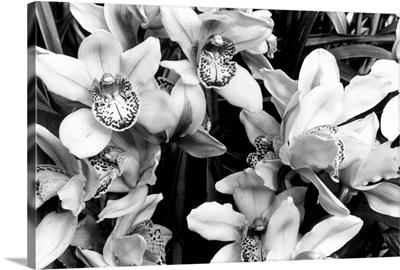 Striking Orchids III