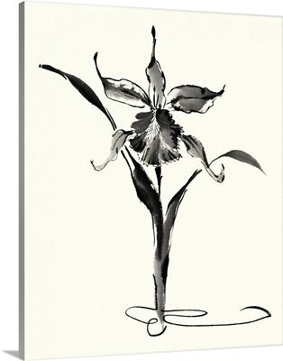 Studies in Ink - Cattleya
