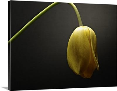 Studio Flowers IX