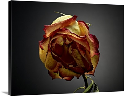Studio Flowers VI
