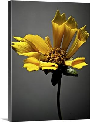 Studio Flowers X