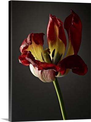 Studio Flowers XII