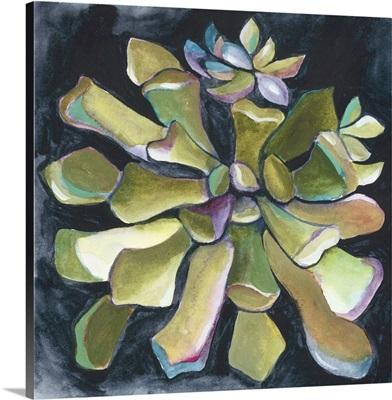 Succulent Rosette I