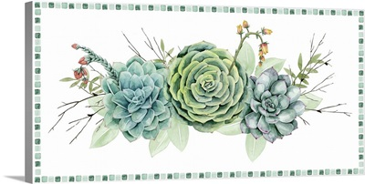 Succulent Swatch Collection D