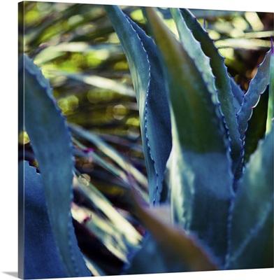 Succulent Vibes II