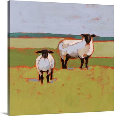 Suffolk Sheep II