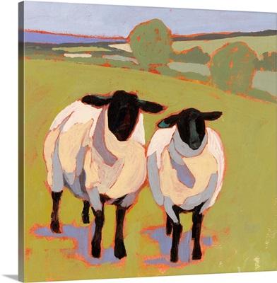 Suffolk Sheep IV