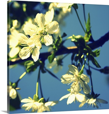 Summer Blossom II