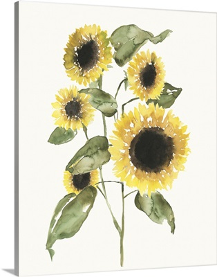 Sunflower Composition I