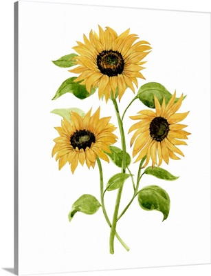 Sunflower Trio I