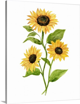 Sunflower Trio II