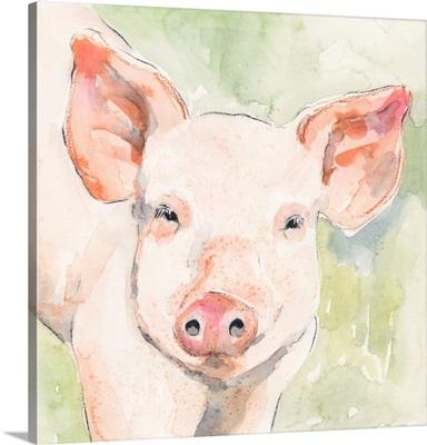 Sunny The Pig I