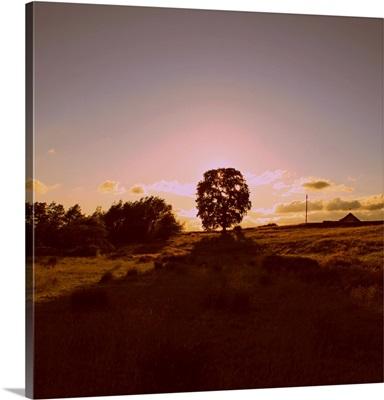 Sunset Field II