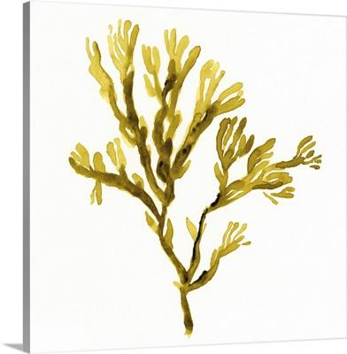 Suspended Seaweed I
