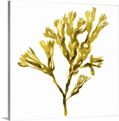 Suspended Seaweed II