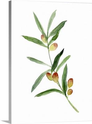 Sweet Olive Branch I