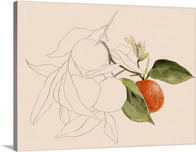 Tangerine Sketch I