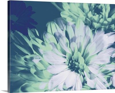 Teal Bloom II