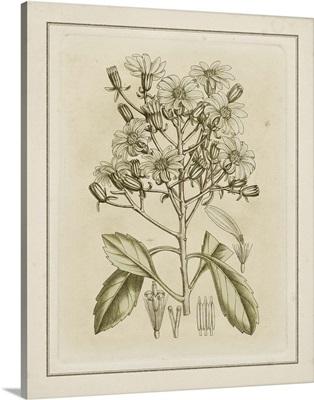 Tinted Botanical I