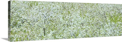 Tree Panorama I