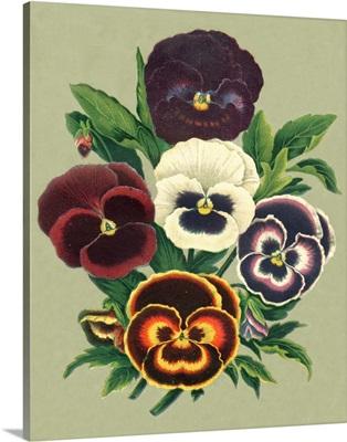 Tricolor Pansies I